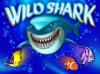 wild-shark-100x74